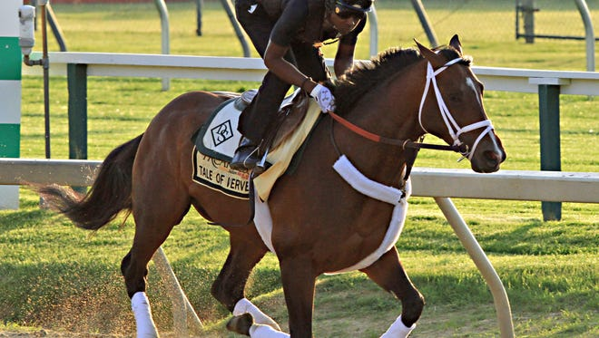 Preakness Stakes entrant Tale of Verve, ridden by exercise rider Kortez Walker, gallops at Pimlico Race Course in Baltimore, Thursday, May 14, 2015.  (AP Photo/Garry Jones)