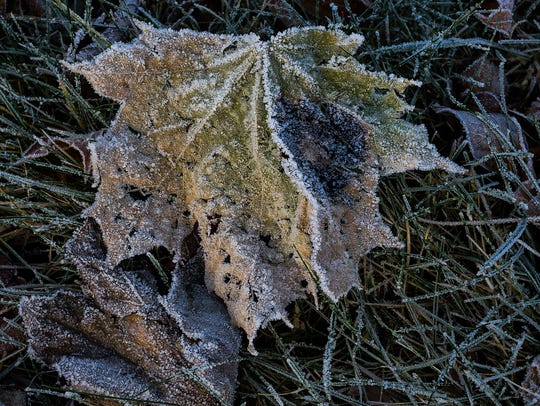 A frost advisory will be in effect in the Lansing area from 2 a.m. to 8 a.m. Saturday.