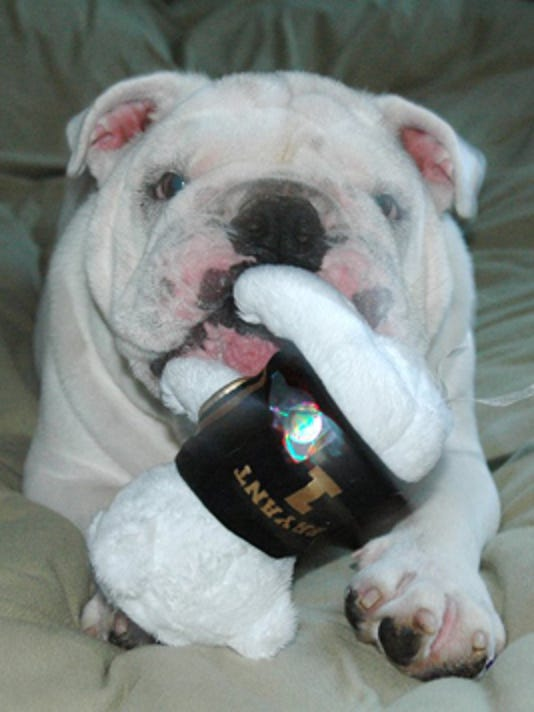 Bryant University Mascot Tupper