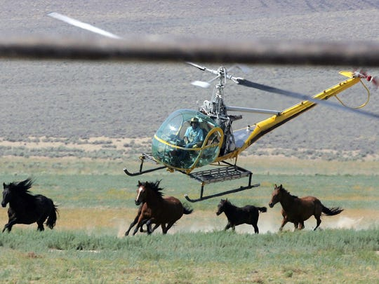 In this July 13, 2008 file photo a livestock helicopter pilot rounds up wild horses from the Fox & Lake Herd Management Area from the range in Washoe County, Nev., near the town on Empire, Nev. Wild horse advocates say President Trump's new budget proposal would undermine protection of an icon of the American West in place for nearly a half century and could send up sending thousands of free-roaming mustangs to slaughter houses in Canada and Mexico.