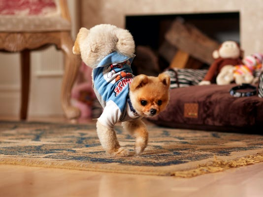 Pets-Go Dog Go_Atki.jpg