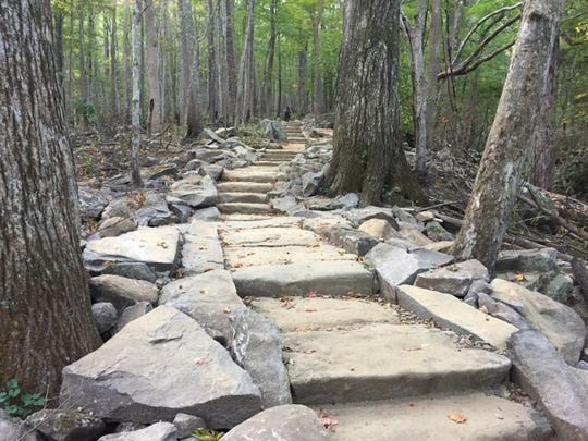 A section of the Rainbow Falls Trail in the Great Smoky Mountains National Park after trail rehabilitation to repair damage and improve erosion control.