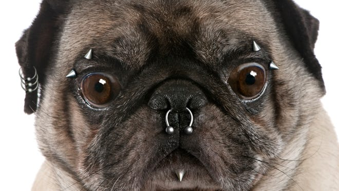 Gov. Andrew Cuomo on Monday signed a bill into law that will ban tattoos and piercing on pets.