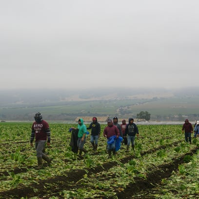 OPINION: More needs to be done to protect farmworkers from pesticides