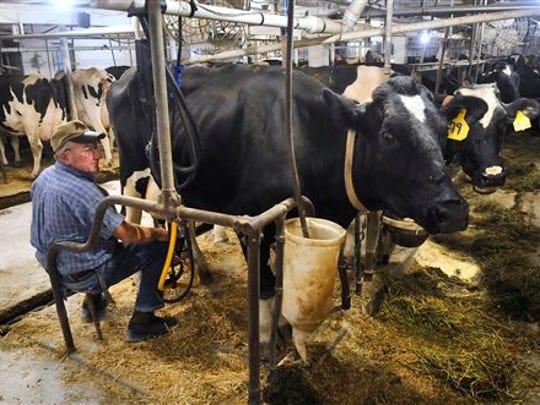 Dairy farmer Dennis Ritter attaches a milking machine