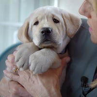 Watch Cute Puppies Get Named In Service Dog Doc Pick Of The Litter