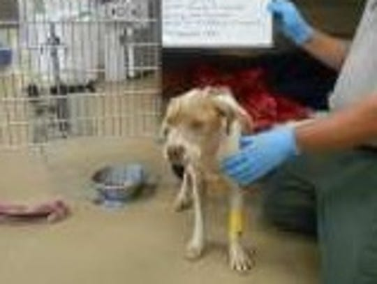 A dog named Sampson was removed from a Cocoa home last