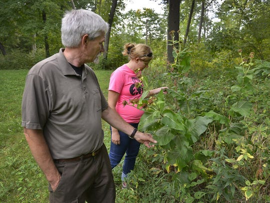 Tom Kroll, forester at the St. John's Abbey Arboretum, and Jenny Kutter, department coordinator for St. John's Outdoor University, look at some of the plant life Sept. 16 along the old St. Joe Road Trail that's part of the arboretum.