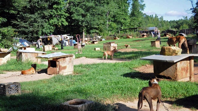 In this Aug. 23, 2013, photo provided by the ASPCA, dogs sit at a home in Auburn, Ala.