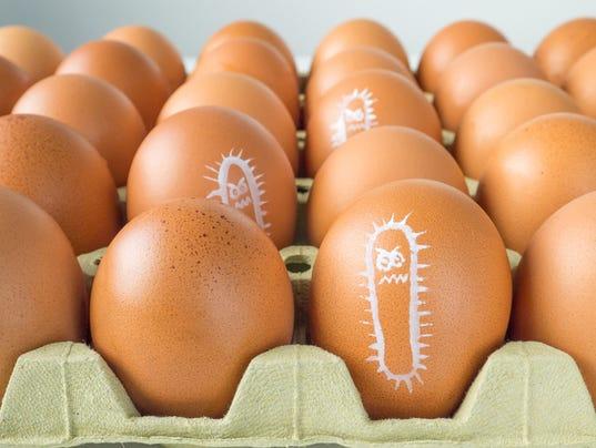 Salmonella bacterium chicken eggs