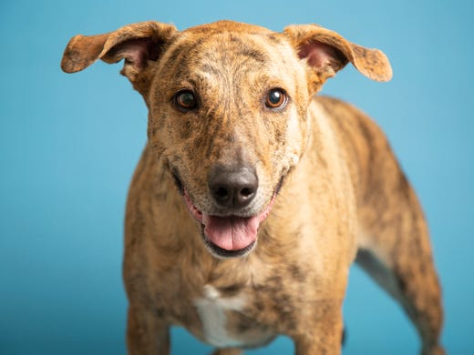 Hydra is available at the Arizona Humane Society's
