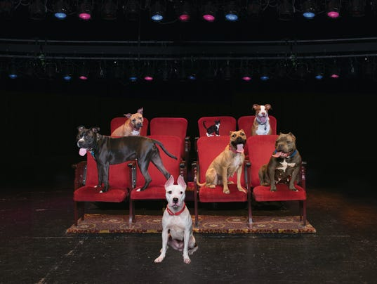 Milwaukee Journal Sentinel Dogs For Sale