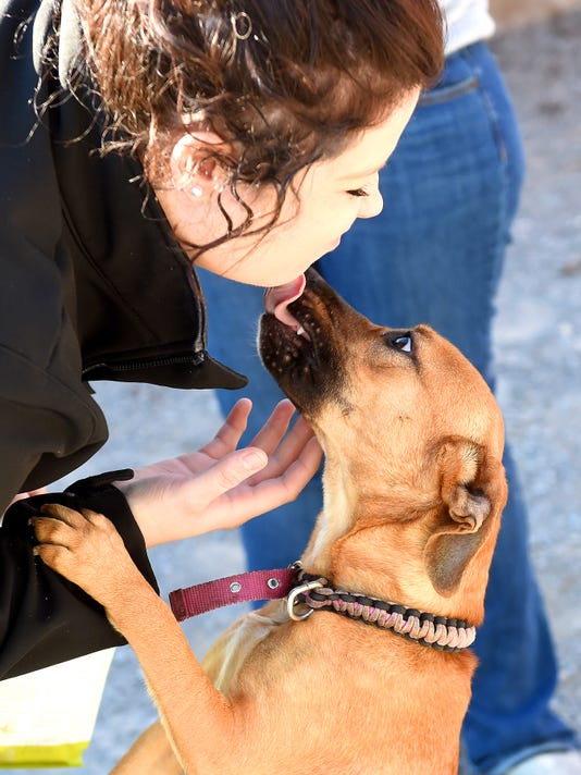Shenandoah Valley Animal Services Center - SVAC