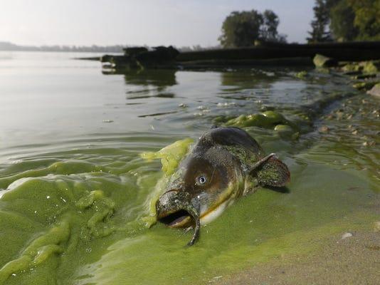 Water Algae Blooms