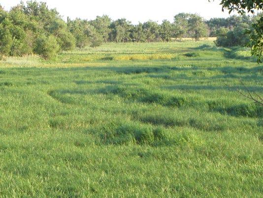 Buggy Creek lands