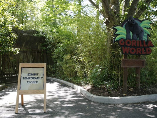 636002281918765793-gorilla.exhibit1.jpg