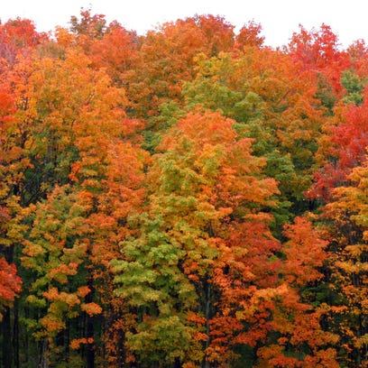 Michigan ranks No. 1 for fall color photography