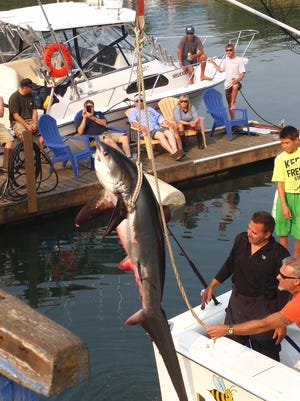 Chris Wheaton of Oceanside, California, black shirt, fought this 165-pound thresher shark for an hour and over 2 miles before the four anglers aboard the Myrtle Bee skippered by John Boyer of Salem subdued it.
