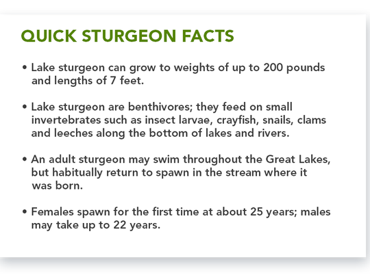 Sturgeon Facts