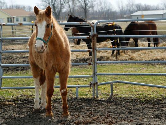 LAF Indiana Horse Rescue