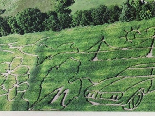 M60 Corn Maze.jpg