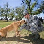 Damian King trains Bella during a Soldier's Best Friend session at Sahuaro Ranch Park in Glendale on Thursday. The non-profit pairs veterans who have post-traumatic stress disorder or traumatic brain injuries with a service or therapy dog.