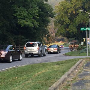 Wnc weighs in on proposed elk hunt for Fishing license nc walmart