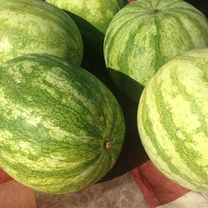 Can You Get Food Poisoning From Watermelon