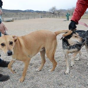 Off Leash Dog Park Fort Collins Co