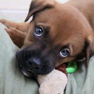 Michigan Dog Bite Euthanasia