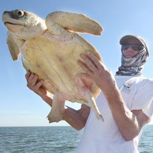 Turtle Nesting Season Begins Sunday