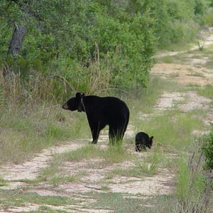 Florida bear hunting permits selling quickly for How much is a non resident fishing license in florida