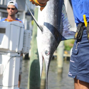 Delaware regional fishing report for Delaware bay fishing report