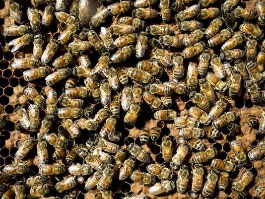 pni honey bees 1026