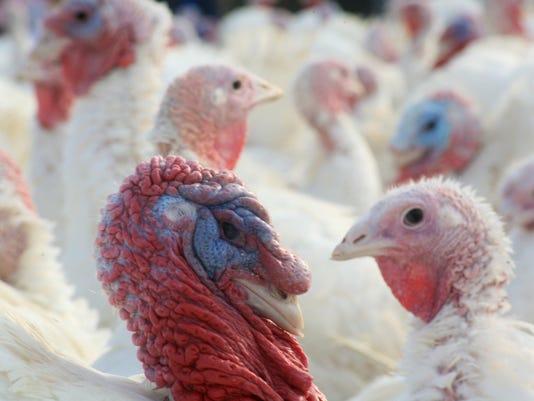 DFP Fresh Turkey (2)