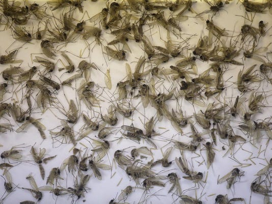 Zika Related Death New Case