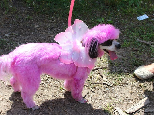 DogPinkFairy 2.jpg