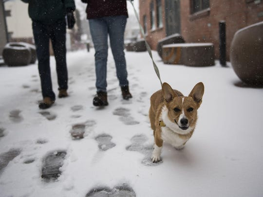 People walk a dog in the snow on Wednesday, March 13, 2019, in Fort Collins, Colo. Low air pressure is how meteorologists measure the strength of a storm, and this is the strongest in Colorado since at least 1950. (Timothy Hurst/The Coloradoan via AP)