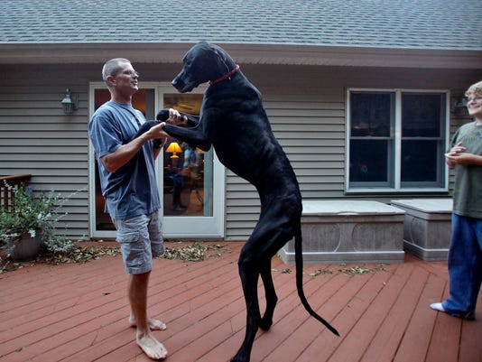 World's Tallest Dog Dies