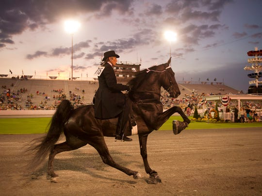 """A walking horse demonstrates the """"Big Lick"""" in competition during this year's Tennessee Walking Horse National Celebration in Shelbyville."""