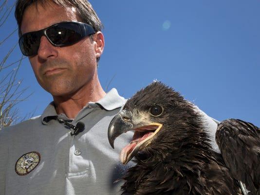PNI 0701 eagles