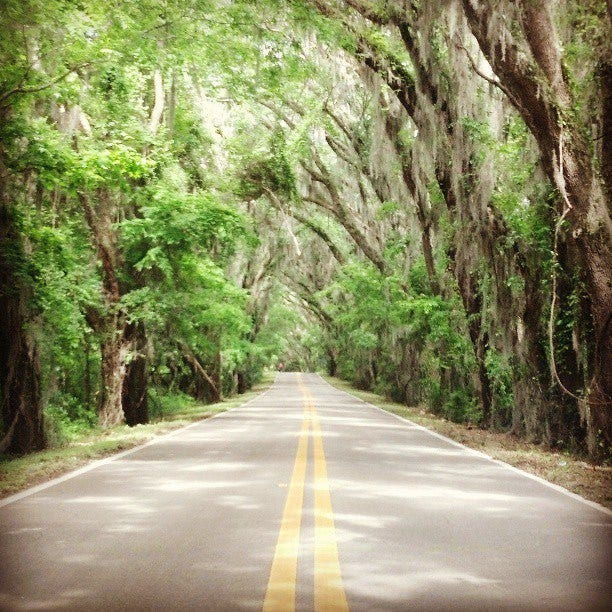 & Canopy roads group meets as future in flux