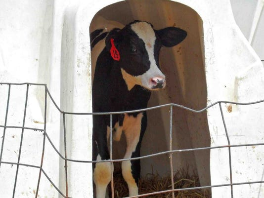 calf-hutch.JPG