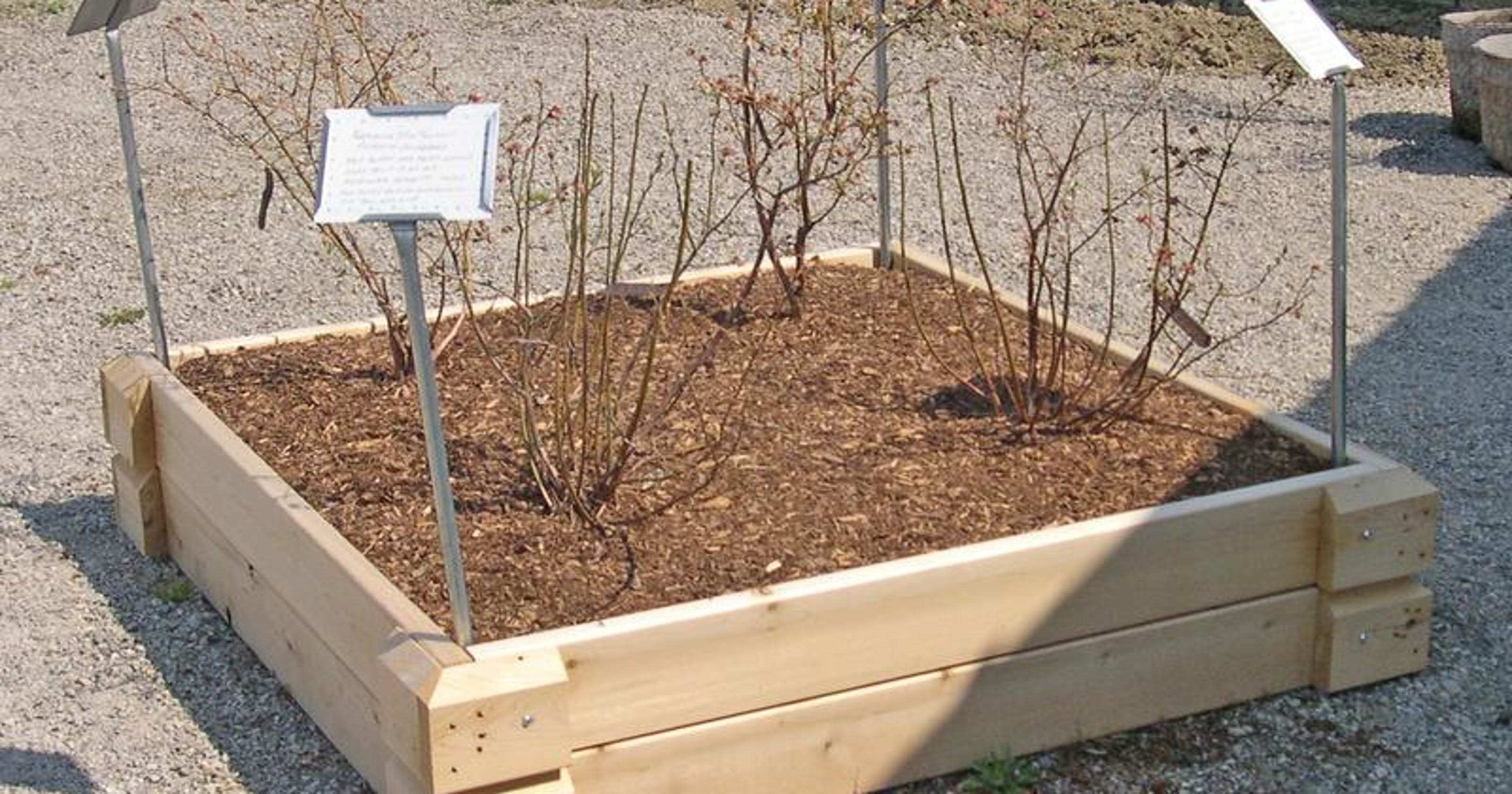 Raised plant beds can make gardening easy