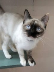 Mila is available for adoption at 10807 N. 96th Ave.