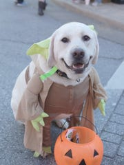 8th Annual Pets & Pumpkins Festival is this Saturday