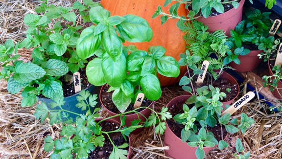Use fresh herbs to stay healthy this fall and winter.