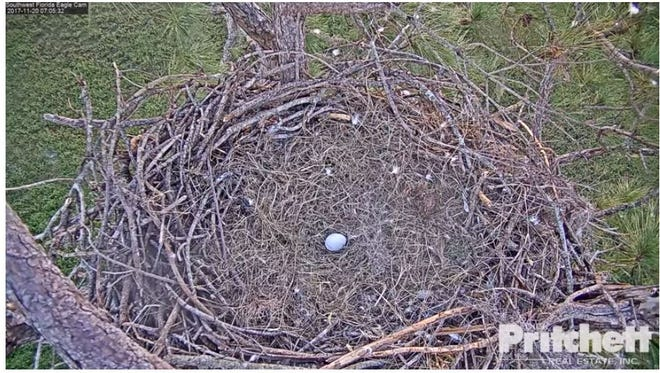 A look at Harriet the eagles' new egg, courtesy of the Southwest Florida Eagle Cam.