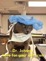Johnny the cat dressed up as a doctor at the PAAC.