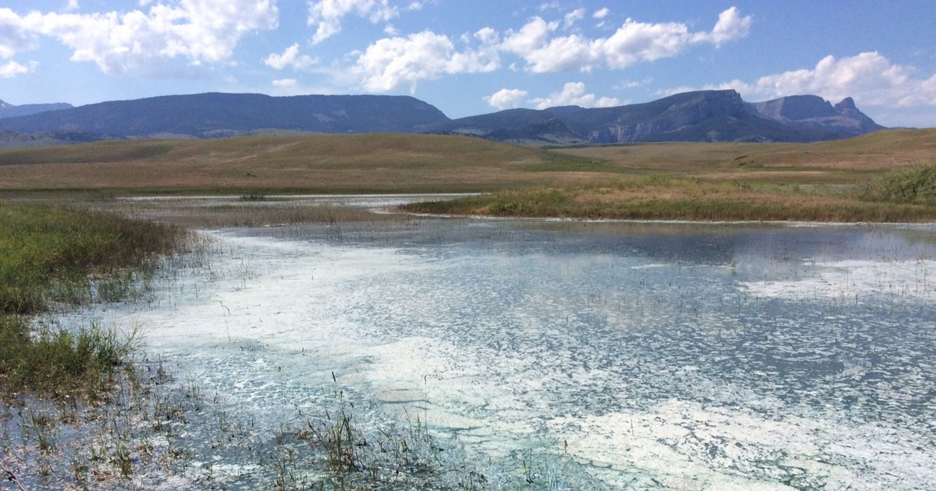 Montana waters threatened by toxic algae blooms